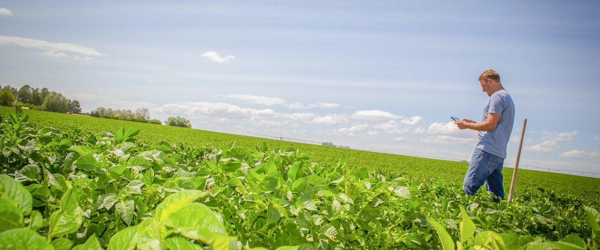 مهندسی کشاورزی در استرالیا-مزایای تحصیل مهندسی کشاورزی در استرالیا