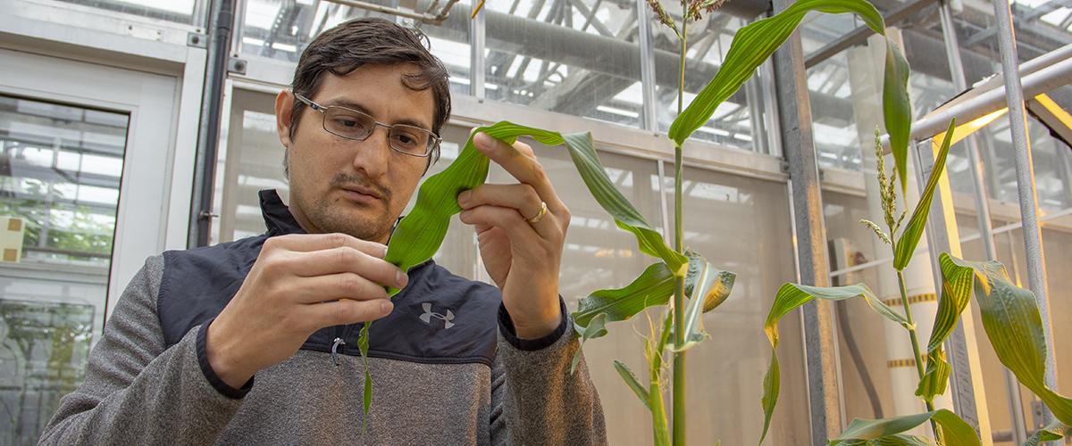 مهندسی کشاورزی در نیوزلند