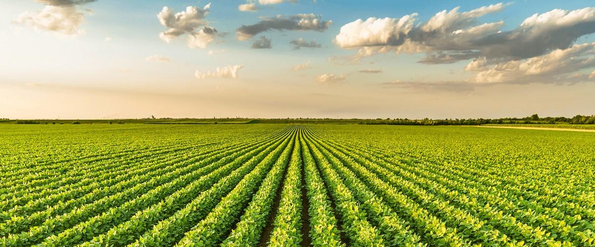 مهندسی کشاورزی در نیوزلند-معایب تحصیل مهندسی کشاورزی در نیوزلند
